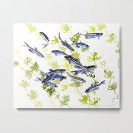 Fish Blue Gray zebrafish, Danio aquarium Aquatic design underwater scene Metal Print