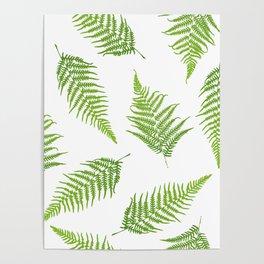 Fern seamless pattern Poster