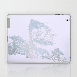 Ancient Tree in wind, snow, and fog on Windy Ridge, Colorado Laptop & iPad Skin