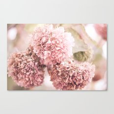 dusty pink Canvas Print