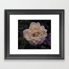 A rose in the rain Framed Art Print