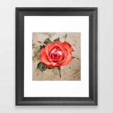 Pop Up Rose Framed Art Print