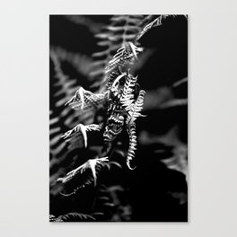 Dragons in the Ferns Canvas Print