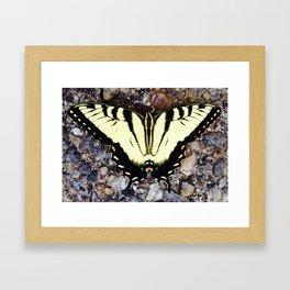 Beautiful Monarch Butterlfy Framed Art Print