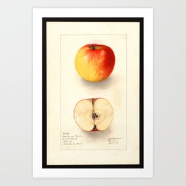 Coxs Orange Pippin Art Print