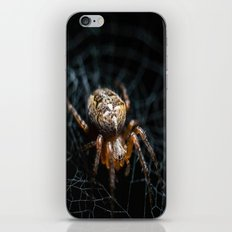 Spider on the web   iPhone & iPod Skin