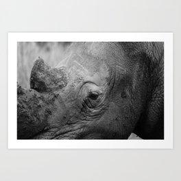 In the eye of the Rhino Art Print