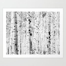 Black and White Aspens Art Print