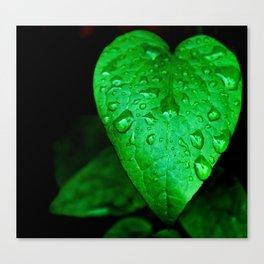 Rain Drops on a Leaf Canvas Print