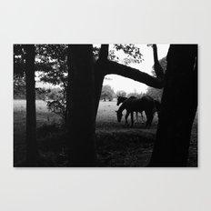 Horses' Silhouette Canvas Print