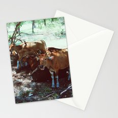 Gili Cows Stationery Cards