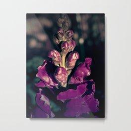 Lupinus-Purple Metal Print