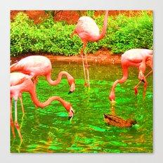 Flaming Flamingo Canvas Print