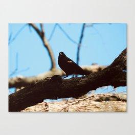 sing sweetly, blackbird Canvas Print
