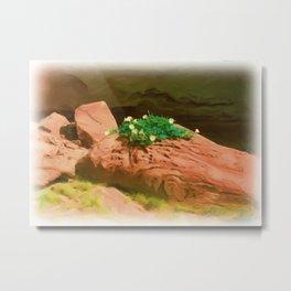 Datura Cavern Metal Print