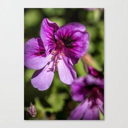 Purple and Pretty Canvas Print
