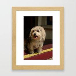 Storefront Dog Framed Art Print