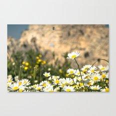Spring Camomile Canvas Print