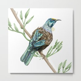 New Zealand Tui bird Metal Print