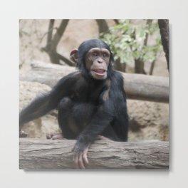 Young Chimpanzee 02 Metal Print