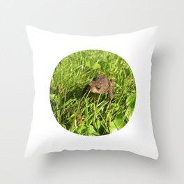 tree frog macro II Throw Pillow