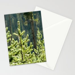 Young Lodgepole Pines after a rain Stationery Cards