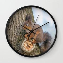 Red squirrel on tree trunk, Forest squirrel (Sciurus vulgaris) Wall Clock