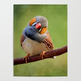 Bird Art - Change Your Opinions Poster