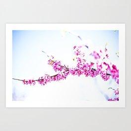 Spring has come 3 Art Print