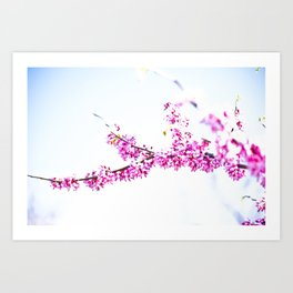 Spring has come 3 Art Print