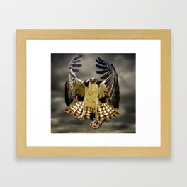 Osprey with fish Framed Art Print