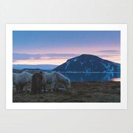 Icelandic Horses and Sunsets Art Print
