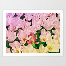 Blooming Tulips Art Print