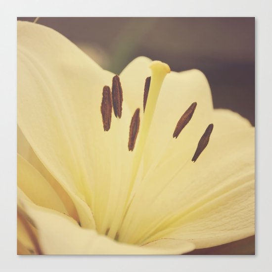 Dreamy Lily Canvas Print