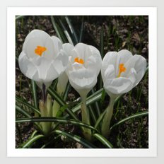 Three Little White Flowers Art Print