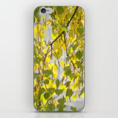 Birch Leaves 7165 iPhone & iPod Skin