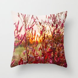 Pink Celosia and Sunset Immersion  Throw Pillow