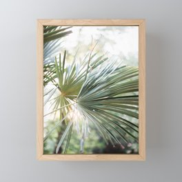 Palm tree in golden hour | Ethereal colors, close up | Wanderlust botanical print Framed Mini Art Print