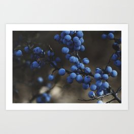 Blueberry Brambles Art Print