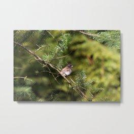 Perching Bird Metal Print