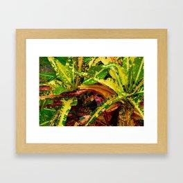 Tropical Croton Plant Framed Art Print