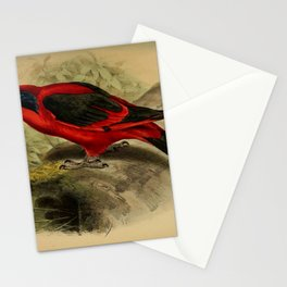 Black winged Lory or Biak Red Lory Stationery Cards