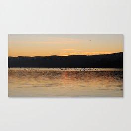 Birds in sunset Canvas Print