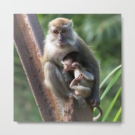 Singaporean Monkeys Metal Print