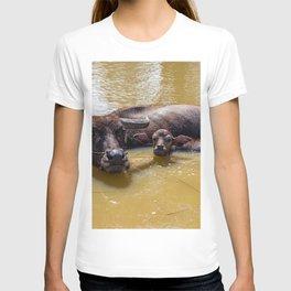 Water Buffalo and Calf T-shirt