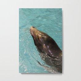 Sea Lion in Water Metal Print