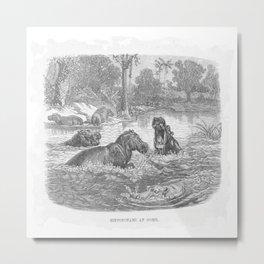 Hippopotami at Home Metal Print