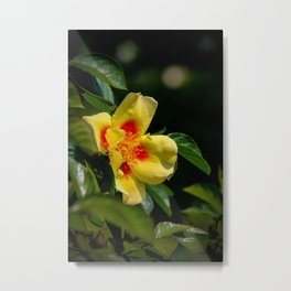 simply colourful Metal Print
