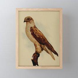 Ferruginous Rough legged Hawk archibuteo ferrugineus3 Framed Mini Art Print