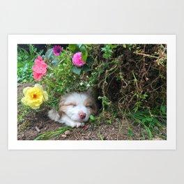 Sleeping puppy in the garden Art Print